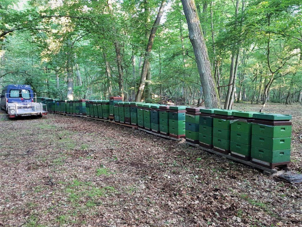 Bienenstöcke im Wald ©Imkerei Butenschön